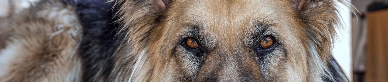 dog-3428575_1280